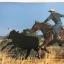 Colorado Cowboys. ผู้เขียน Christopher Marona thumbnail 13