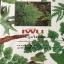 เฟิน ต้นตระกูลไม้ประดับ ฉบับปรับปรุงและเพิ่มเติม thumbnail 1