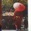 หนังสือเกี่ยวกับญี่ปุ่น4เล่ม1)ความพินาศของโตเกียว 2) จดหมายจากเกียวโต 3) เกียวโต ไดอารี่ 4)ไอ้หนูซามูไร วิถีแห่งดาบ thumbnail 20