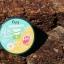 Envy Vit C Plus Aloe Vera Gel เจลว่านหางจระเข้ Envy บำรุงผิวชุ่มชื้นขาวใส thumbnail 5