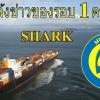 !!! แจ้งข่าวการมาถึงของรอบที่ 1 กีตาร์โปร่ง ไฟฟ้า SHARK รุ่น SK08-CS F/presys blend